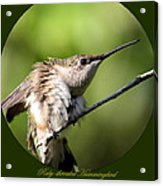 Ruby-throated Hummingbird  - The Stretch Acrylic Print