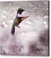 Ruby's Flight Acrylic Print by Cris Hayes