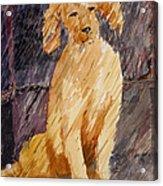 Rudy In The Rain Acrylic Print
