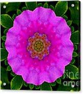 Rugosa Kaleidoscope Acrylic Print