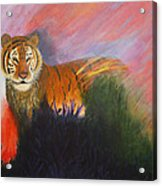 Ruler Of The Sunderban Acrylic Print
