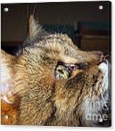Runcius- The King Kitty Acrylic Print
