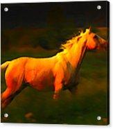 Running Palomino Acrylic Print