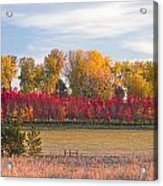 Rural Country Autumn Scenic View Acrylic Print