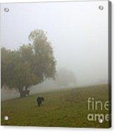 Rural Fog Acrylic Print by Mike  Dawson