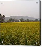 Rural Landscape With A Field Of Mustard Acrylic Print