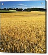 Rural Summer Scene Acrylic Print
