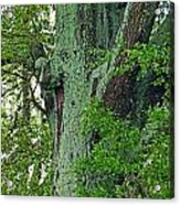 Rural Trees Close Up Acrylic Print