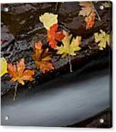 Rushing Autumn Acrylic Print by Jim Speth