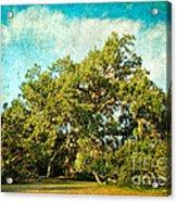 Ruskin Oak Acrylic Print
