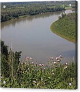 Russian Thistle By The North Saskatchewan River Acrylic Print