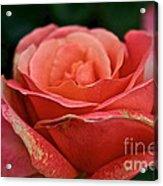 Rustic Rose Acrylic Print