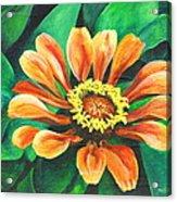Ruth's Lilly Acrylic Print