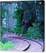 S Curve In The Forest Acrylic Print