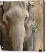 Sad Elephant Acrylic Print