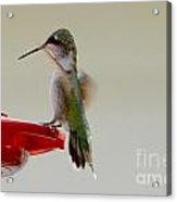 Safe Landing Acrylic Print