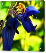 Sage And Bee Number Two Acrylic Print