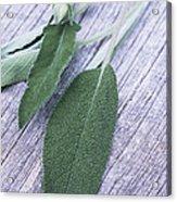 Sage Leaves Acrylic Print