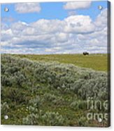 Sagebrush And Buffalo Acrylic Print