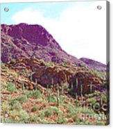 Saguara National Forest In Arizona Acrylic Print