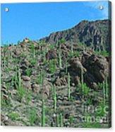 Saguara National Forest Protected Cactus Acrylic Print