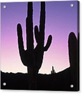 Saguro Cactus Acrylic Print by Barry Shaffer