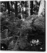 Saint Patricks Well Altadaven Favor Royal Forest Bullaun Stone County Tyrone Ireland Acrylic Print by Joe Fox