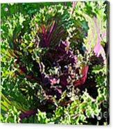 Salad Maker Acrylic Print