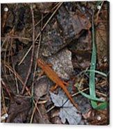 Salamander Acrylic Print by Lali Partsvania
