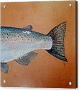 Salmon 2 Acrylic Print
