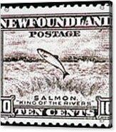 Salmon King Of The Rivers Acrylic Print