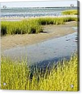 Salt Marsh Habitat With Flock Of Birds Acrylic Print