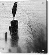 Saltwater Sentry Acrylic Print