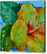 San Diego Hibiscus Study I Underwater Acrylic Print