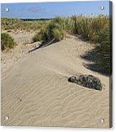 Sand And Grass Dunes Acrylic Print