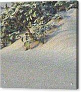 Sand Dune Greenery Acrylic Print