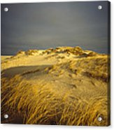 Sand Dunes And Beach Grass In Golden Acrylic Print