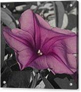Sand Flower Acrylic Print