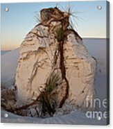 Sand Pedestal With Yucca Acrylic Print