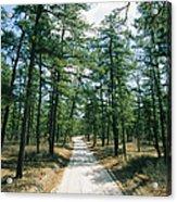 Sand Road Through The Pine Barrens, New Acrylic Print
