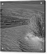 Sand Shrub 3 Acrylic Print