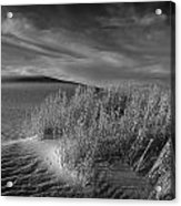Sand Shrub 4 Acrylic Print