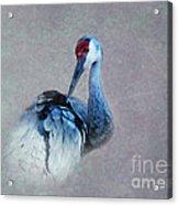 Sandhill Crane 2 Acrylic Print