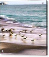 Sandpiper Evening Acrylic Print