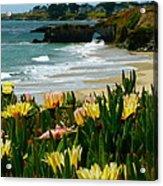Santa Cruz Beauty Acrylic Print