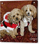 Santa Puppies Acrylic Print