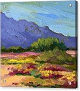 Santa Rosa Mountains In Spring Acrylic Print