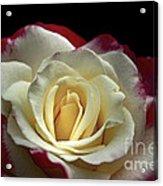 Sarah's Rose Acrylic Print