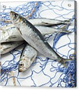 Sardines With Fishnet On White Background Acrylic Print