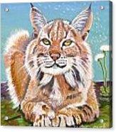 Sassy Lynx Acrylic Print